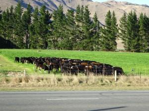 牧草地帯に入りました