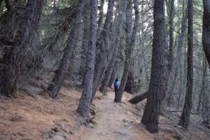 林の中を登っていくと・・・