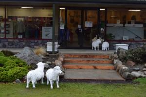 羊たちも雨宿り