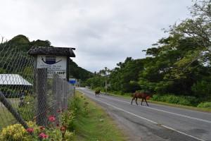 道路を横断中の馬